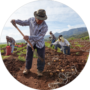 Partnerships with Hawaii Agriculture