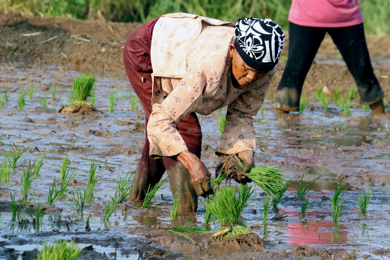Permodalan Sebagai Masalah Utama Petani Indonesia