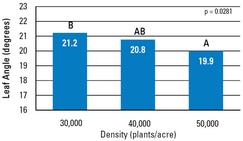 Chart: Average angle of the 15th leaf by plant density.