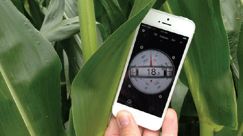 Corn leaf angle measurements were taken using aclinometer smartphone app.