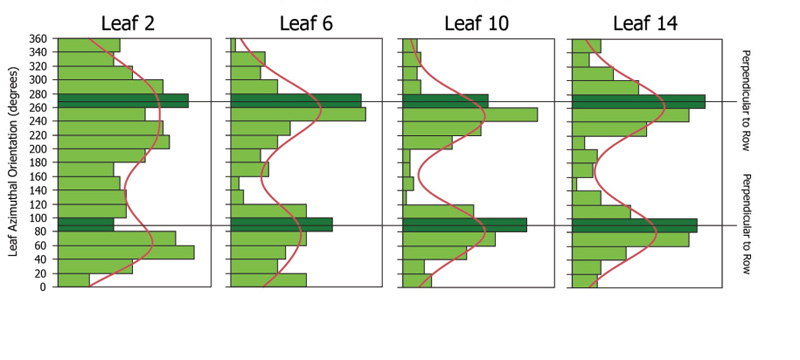 Distribution of azimuthal orientation for leaf 2, leaf 6, leaf 10, and leaf 14 averaged across corn products and population densities.