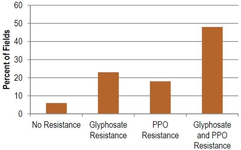 Percentage of Illinois fields with no resistance, resistance to glyphosate, resistance to PPO-inhibiting herbicides, or resistance to both herbicides.