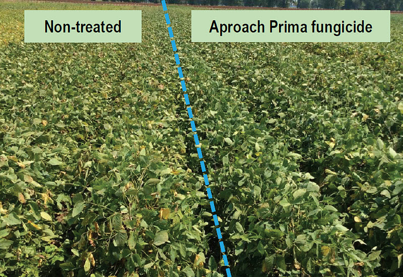 Pioneer variety P54T94R nontreated (left) and treated with Aproach Prima (right) near Leland, Miss. in 2015.