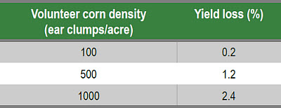 Predictions of corn yield loss due to volunteer corn ear clumps