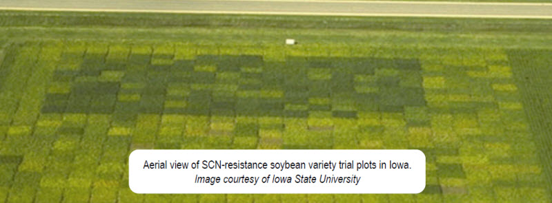Aerial view of SCN-resistance soybean variety trial plots in Iowa.