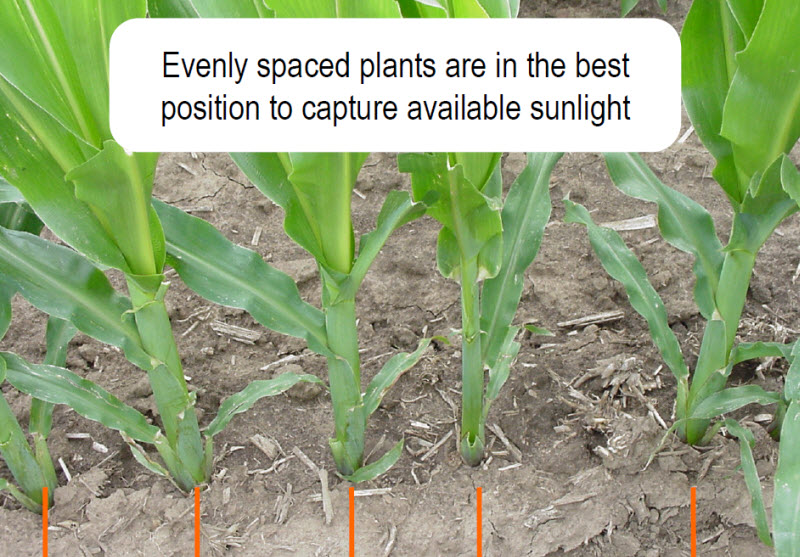 Pioneer: hybrid corn production guide.