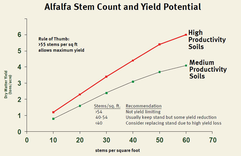 Chart: Alfalfa Stem Count and Yield Potential (dry matter yield)