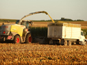 Harvest - Corn Silage Management