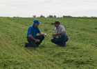 Brushing Up on Alfalfa Production Will Help Improve Quality