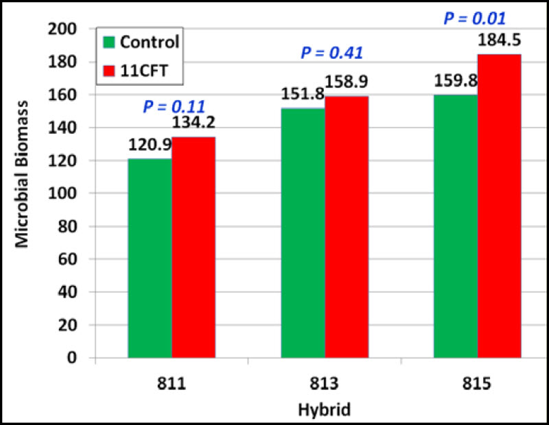 Microbial biomass (mg/g) in control and 11CFT-treated hybrids