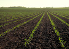 Soil Compaction Can Rob Long-Term Crop Yields