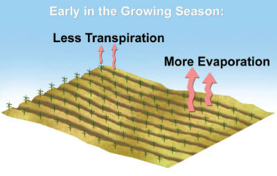 Sources of ET early in the growing season