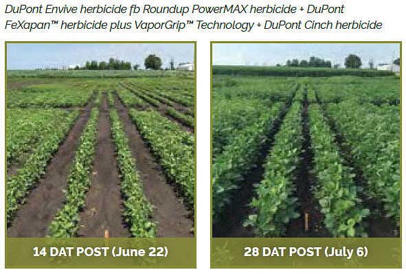 Soybean field treasted with DuPont Envive herbicide fb Roundup PowerMAX herbicide + DuPont FeXapan™ herbicide plus VaporGrip™ Technology + DuPont Cinch herbicide