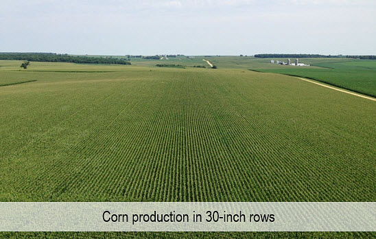 This is a long-distance photo of a corn field planted in 30-inch rows.