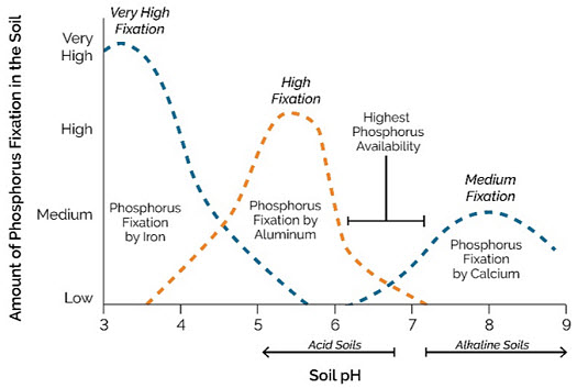 Chart showing the effect of soil pH on phosphorus availability.