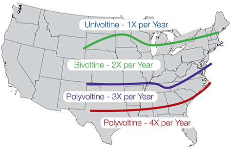 Map showing the approximate geographic range of univoltine, bivoltine, and polyvoltine populations of European corn borer in the United States.