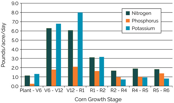 Chart showing estimated uptake of nitrogen, phosphorus, and potassium from the soil required to support a grain yield of 300 bu/acre at different corn growth stages.