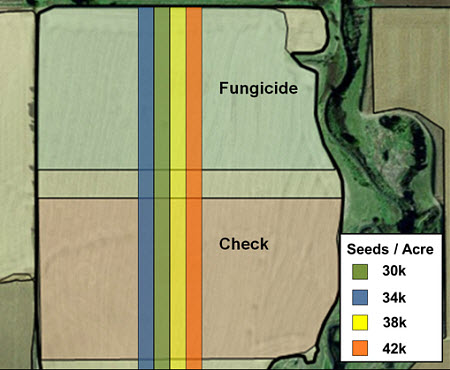 Visualization of fungicide and seeding rate treatment layers in Pioneer Field360 services.