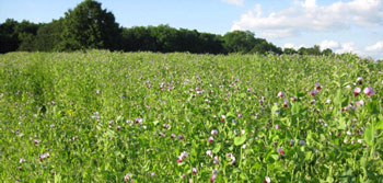 managing winter cover crops in corn and soybean cropping systems