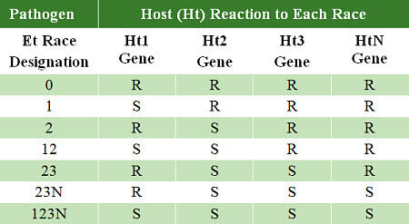 Common sources of resistance Ht genes.