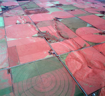 Aerial color-infrared image depicting spatial variation in crop vigor for several fields.