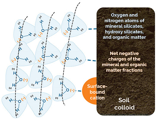 This is an illustration - multiple rings of water molecules form around each soil colloid.