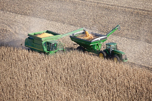 Photo showing corn harvest.