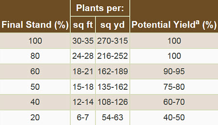 Wheat yield potential based on plants per square foot or square yard.