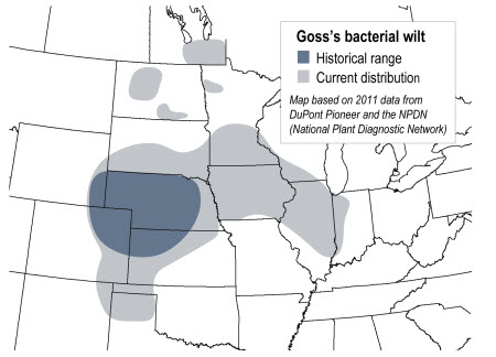 Map: Goss's Wilt Occurrence, U.S., 2010-2011
