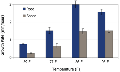 Average early root and shoot growth rates for 3 hybrids under 4 soil temperatures ranging from 59 to 95 F.