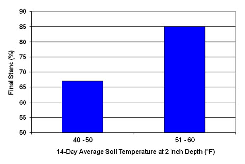 Relationship of soil temperature at planting depth to final stand.