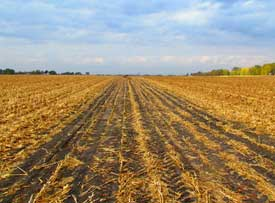 Photo: Pioneer research plot following corn stover harvest in the fall.