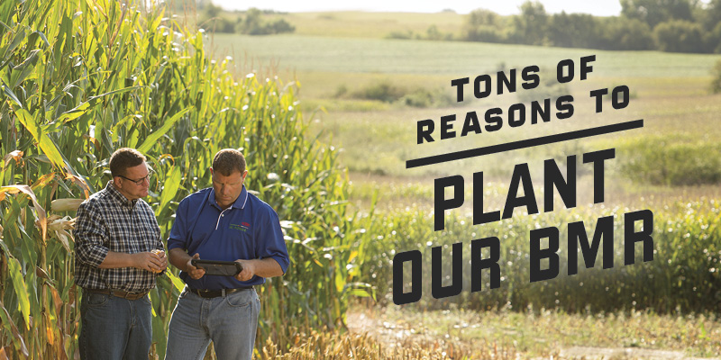 Tons of reasons to plant our BMR.