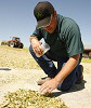 Corn Silage Management Tips