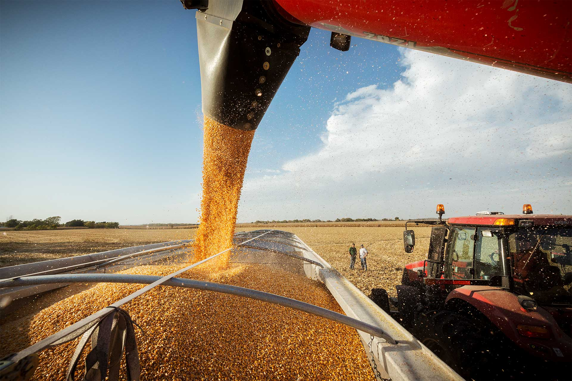Get Tips For Grain Quality Management.