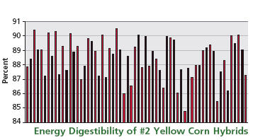 Energy Digestibility of #2 Yellow Corn Hybrids
