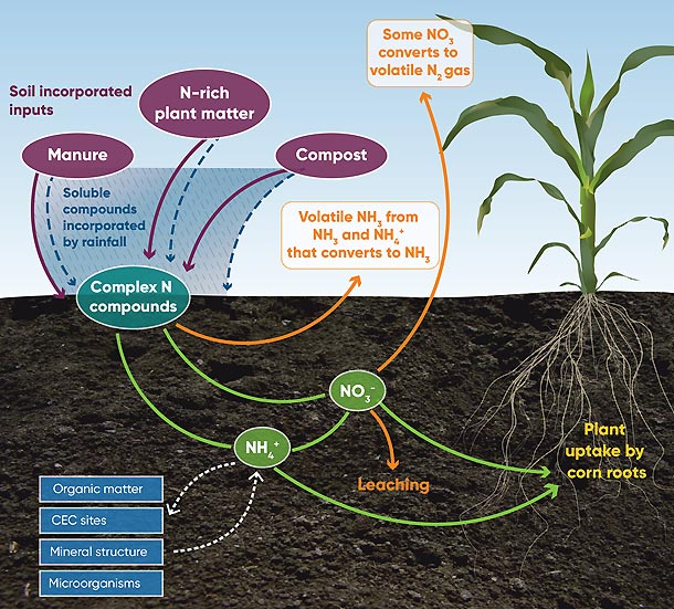 Illustration - Environmental fates and pathways of different forms of organic nitrogen fertilizer.