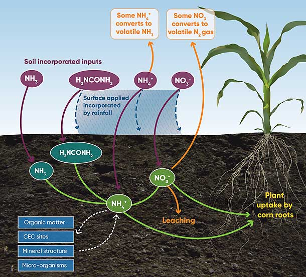 Illiustration - Environmental fates and pathways of different forms of synthetic nitrogen fertilizer.