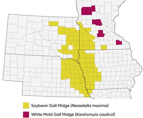Midwest US map showing counties with documented infestations of soybean gall midge and white mold gall midge (2019).