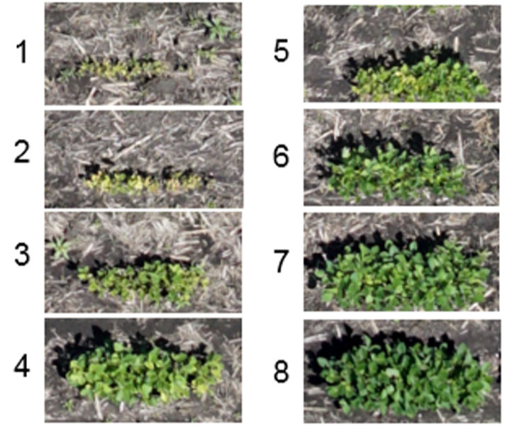 Photos - UAS imagery showing differences in IDC tolerance among soybean varieties in a Corteva Agriscience field screening nursery.