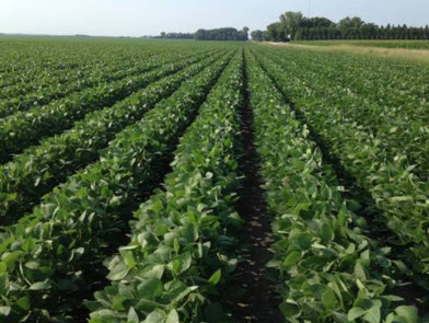 imgChange|  https://www.pioneer.com/multimedia/imgGalleries/cropTour/0718_hasler1.jpg|txtChange|Soybeans at R3 growth   stage near Austin, Minn.
